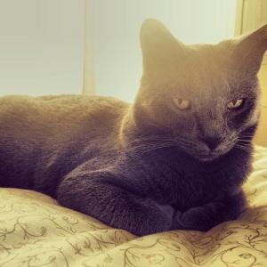 Zen Cat.